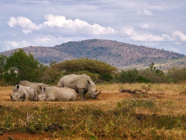 Rino Séjour en Afrique du Sud, Agence de Voyage Roadtrip Evasion