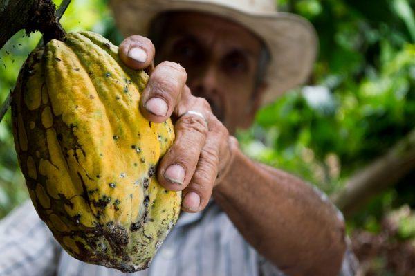 Grosse fève de cacao Road Trip Evasion