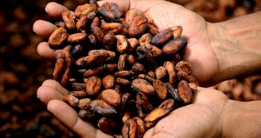 fève de cacao Road Trip Evasion