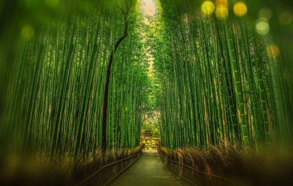 Séjour au Japon, Agence de Voyage Roadtrip Evasion