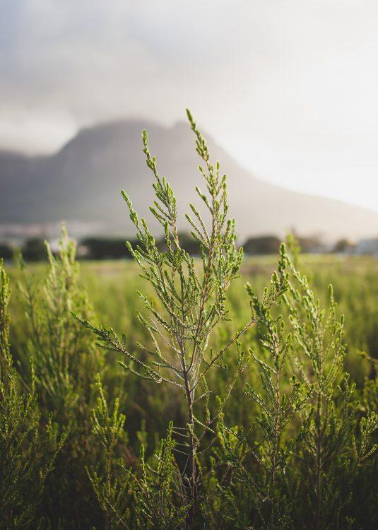 Séjour en Afrique du Sud, Agence de Voyage Roadtrip Evasion
