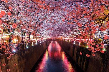 Floraison cerisier - Japon - Sejour Road Trip Evasion