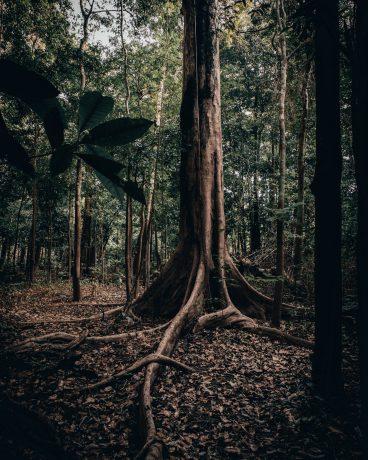 Arbre - Amazonie - Séjour Road Trip Evasion
