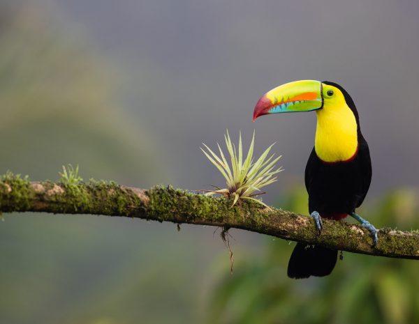 Costa Rica - Sejour sur mesure - Road Trip Evasion
